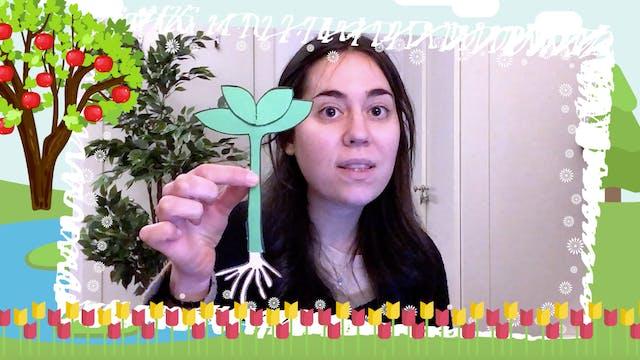 2ºPrim. CCNN. Reproducción plantas. V...