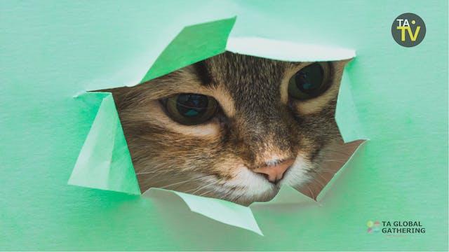 Feline Good? The Cat's Eye View of th...