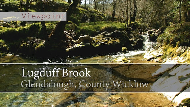 Lugduff Brook, Glendalough, County Wicklow