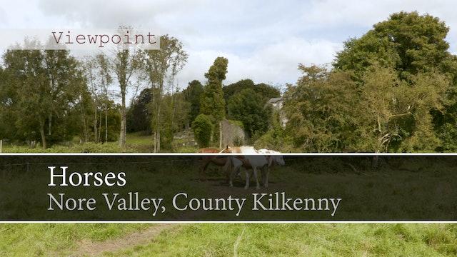 Horses, Nore Valley Way, County Kilkenny