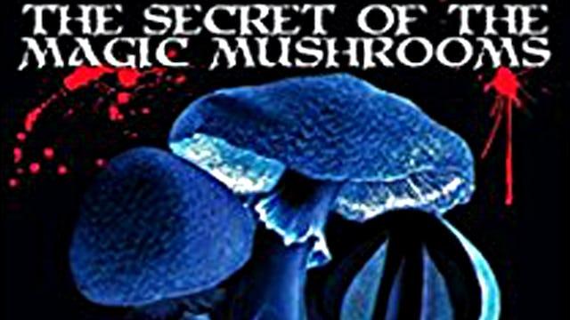 The Secrect of the Magic Mushrooms