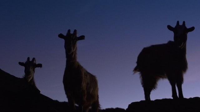 L'Ultimu Sognu - Last Dream in Petra-Blanca