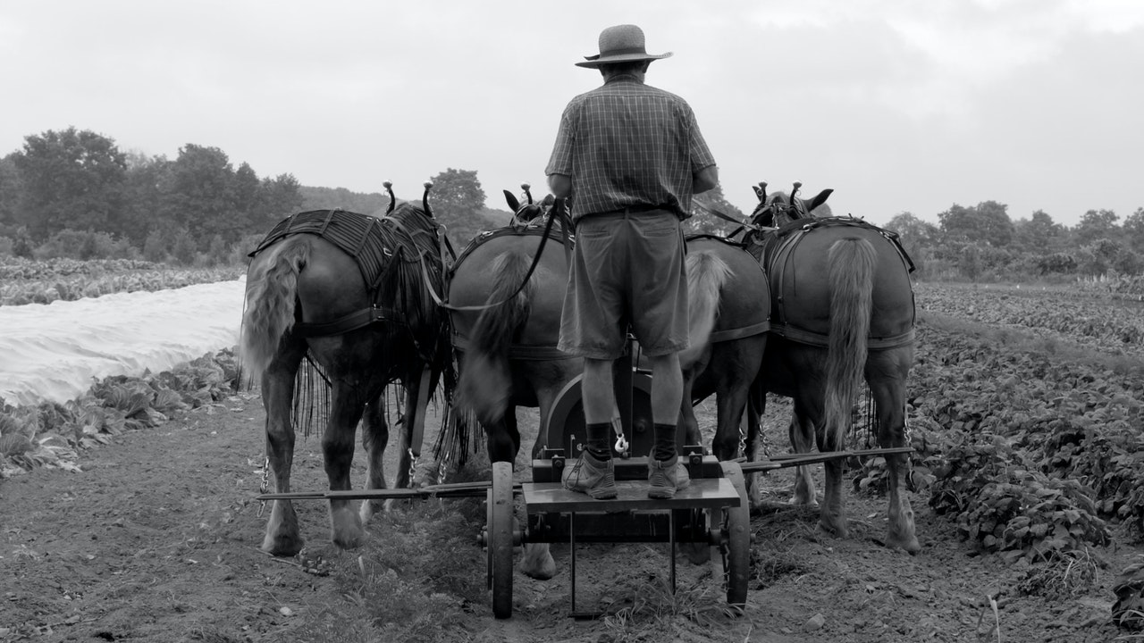 Workhorse