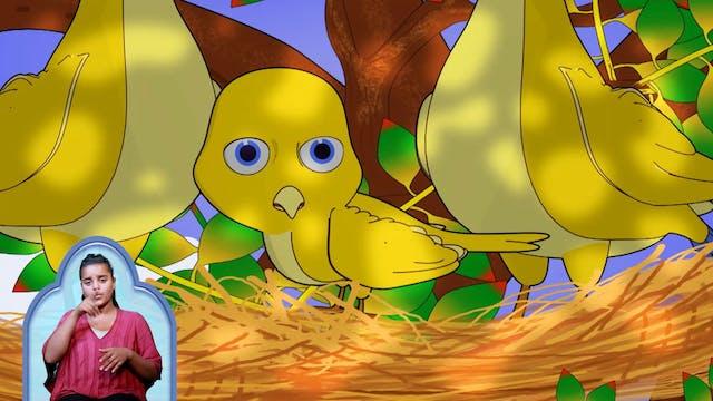 የጠፋዉ ትንሹ ወፍ | Little lost bird