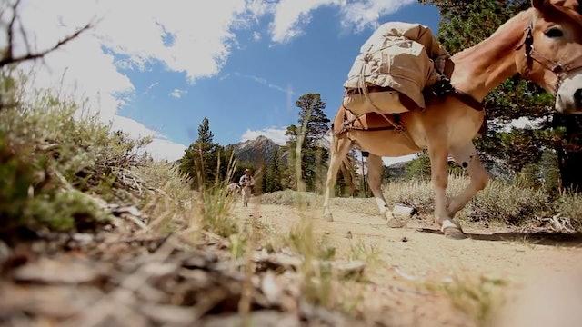 Interesting Dynamics: Beasts of Burden
