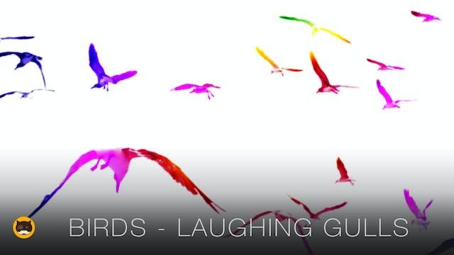 Catching Birds - Laughing Gull