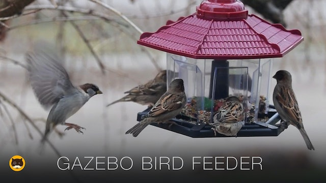 Gazebo Bird Feeder - Video for Cats to Watch
