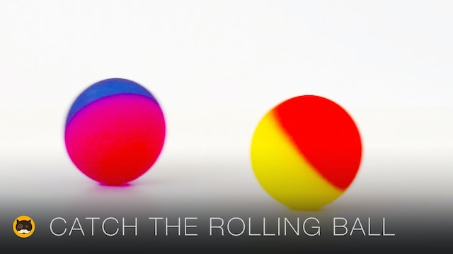CAT GAMES - Catch the Rolling Ball. Videos for Cats