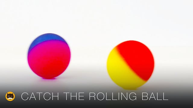CAT GAMES - Catch the Rolling Ball. V...