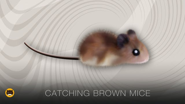 Mouse Video for Cats - Brown Mice