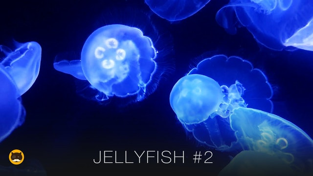 Video for Cats - Jellyfish #2
