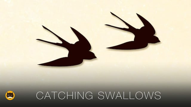 Cat Games - Catching Swallows