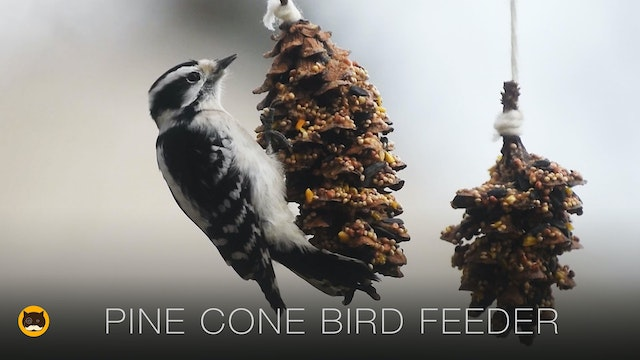 Cat TV Online - Pine Cone Bird Feeder