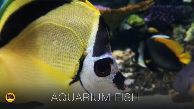 Fish Video for Cats - Aquarium Fish