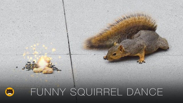 Cat Games - Funny Squirrel Dance. CAT...