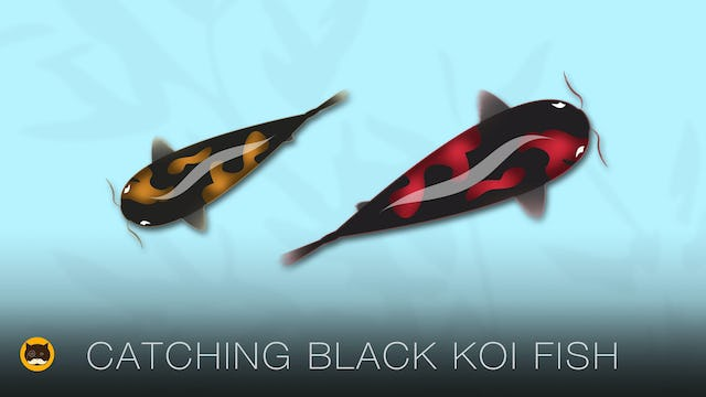 Fish Video for Cats - Black Koi Fish