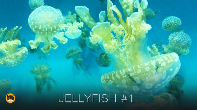 Video for Cats to Watch - Jellyfish #1