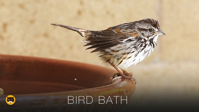 Videos for Cats to Watch - BIRD BATH