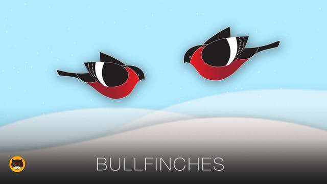 Video for Cats - Bullfinches