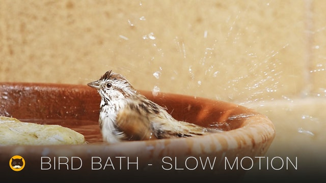 Happy Moments - BIRD BATH. Birds in Slow Motion