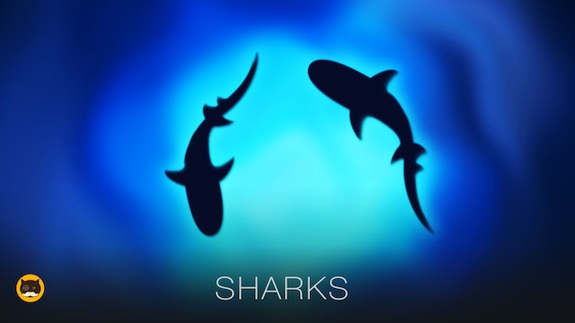 Fish Video for Cats - Sharks