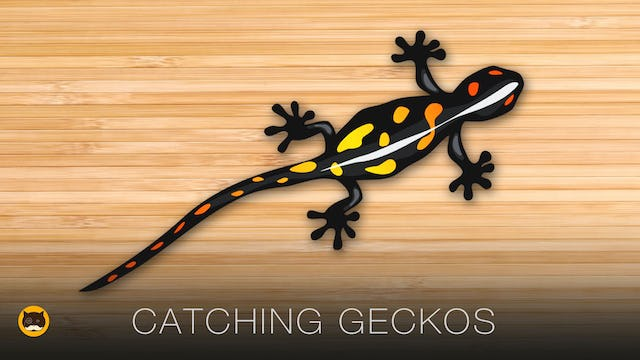 Games for Cats to Play - Catching Geckos