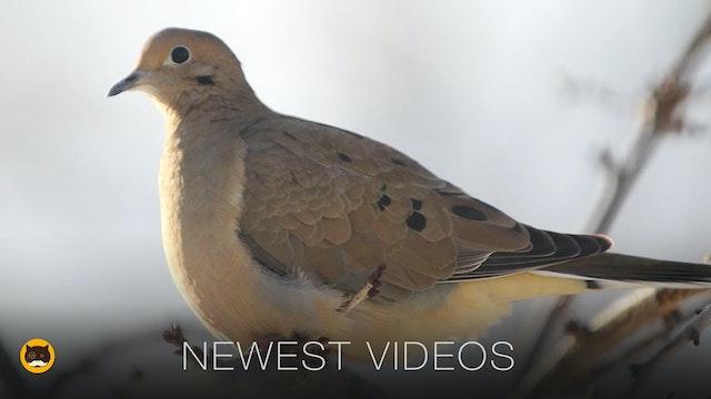 Newest Videos