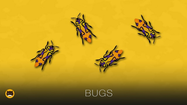 Cat Games - Bugs. Insects Video for Cats