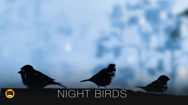 Movie for Cats - Night Birds