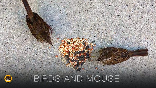 Videos for Cats - Birds and Mouse