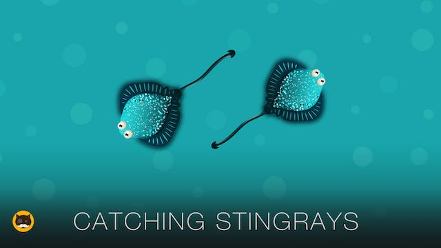 Games for Cats - Stingrays