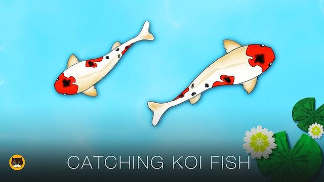Fish Video for Cats - Koi Fsh