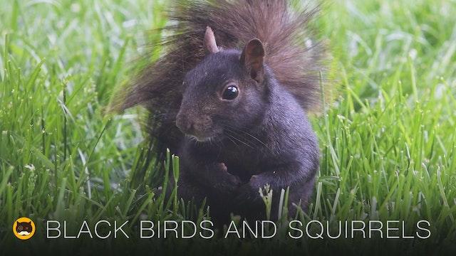Cat TV - Black Birds and Squirrels