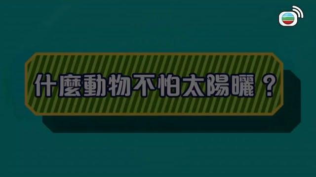 12個夏天 第12集