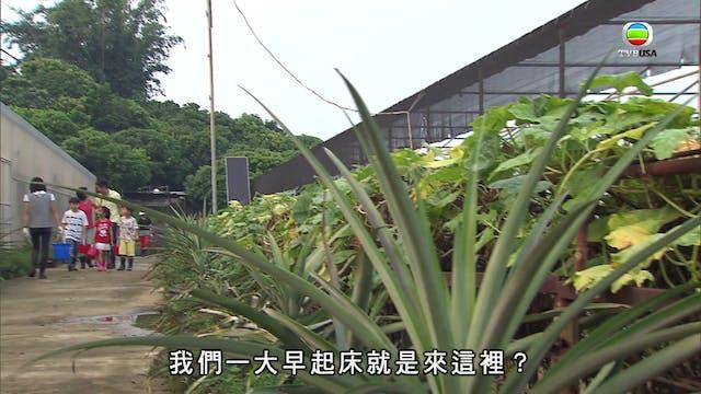超能老豆 第11集