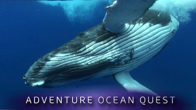 Adventure Ocean Quest: The Giants of Rurutu