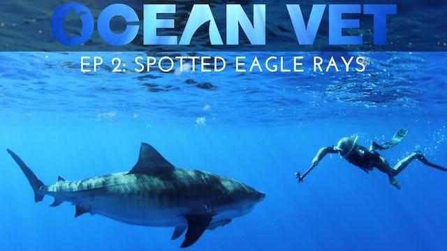 Ocean Vet: Season 1, Episode 2