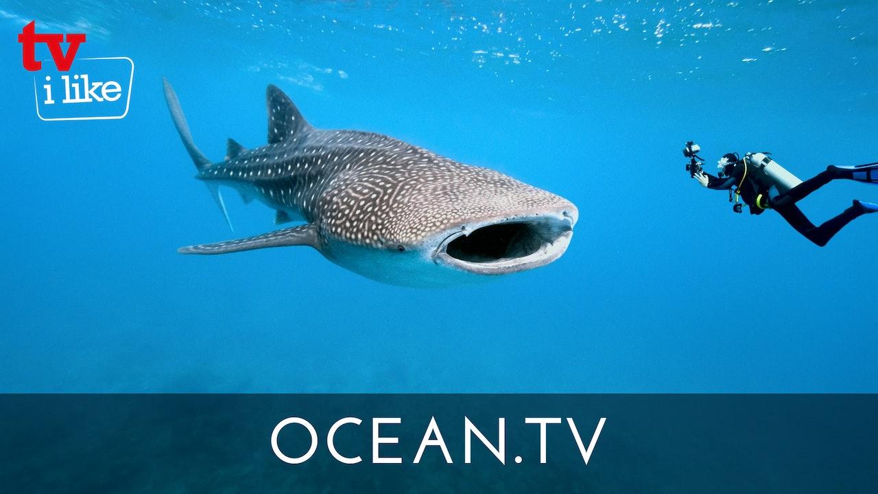 OCEAN.TV