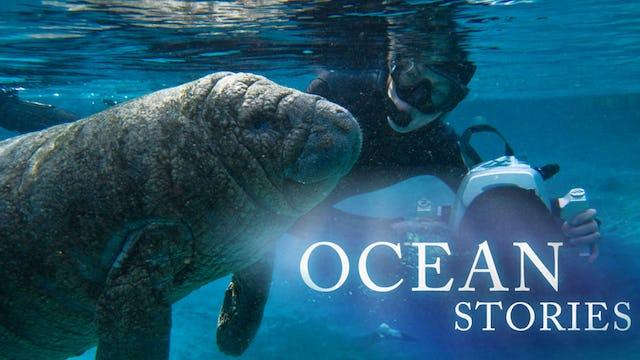 Ocean Stories II: Manatees and Molas