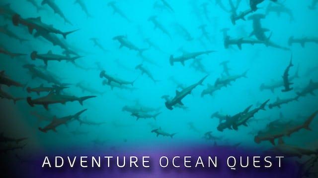 Adventure Ocean Quest: Shark Paradise of Polynesia