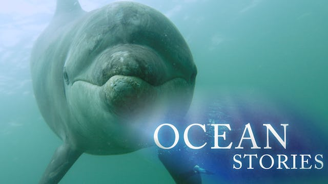 Ocean Stories III: Dolphins and Whales