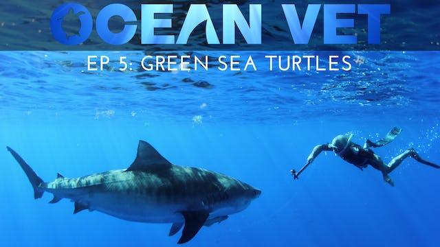 Ocean Vet: Season 1, Episode 5