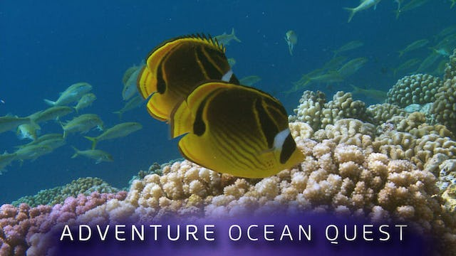 Adventure Ocean Quest: 24 Hours on the Reef