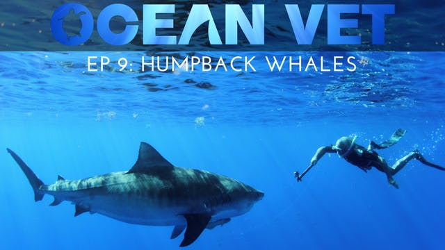 Ocean Vet: Season 1, Episode 9