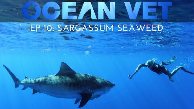 Ocean Vet: Season 1, Episode 10