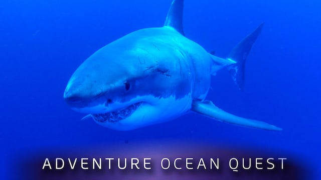 Adventure Ocean Quest: White Sharks of Guadalupe
