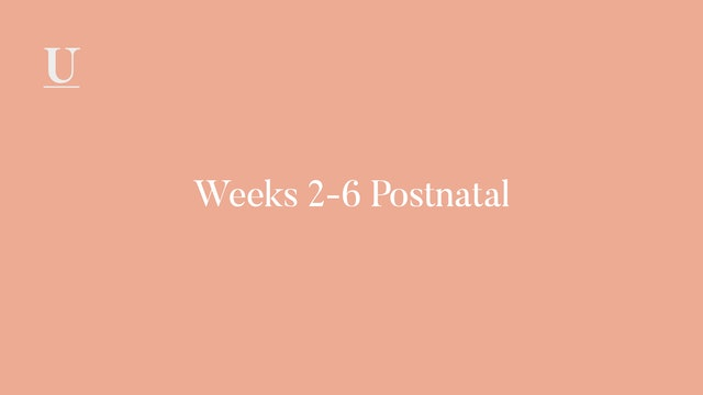 Weeks 2-6 Postnatal