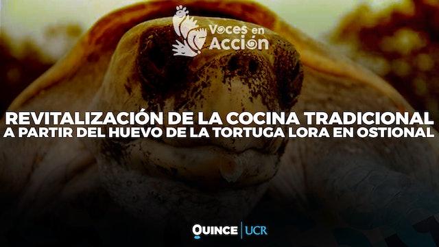 Voces en Acción: Huevo de tortuga Lora en Ostional