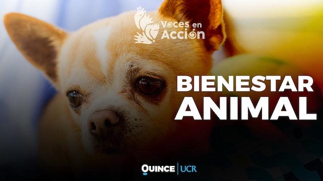 Voces en Acción: Bienestar animal
