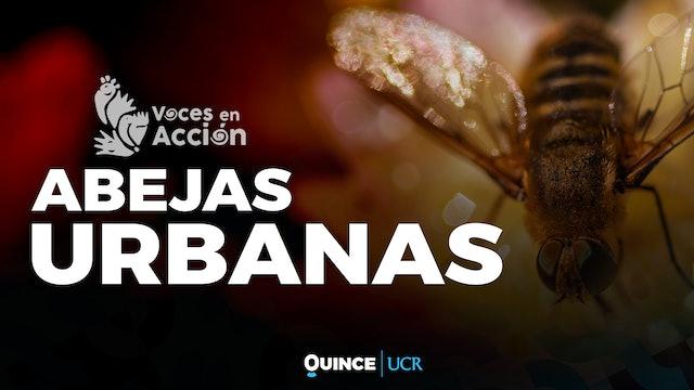 Voces en Acción: Abejas urbanas